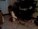Васенька играет с ёлочной игрушкой.